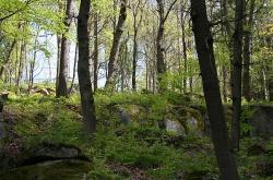 Vyhlídka Bedřichův kámen